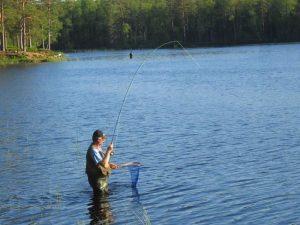 Angeln am Kalvsjön in Schweden: Mit Rute und Kescher