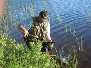 """Angeln am Kalvsjön in Schweden: """"Nahkampf"""" mit Kescher"""