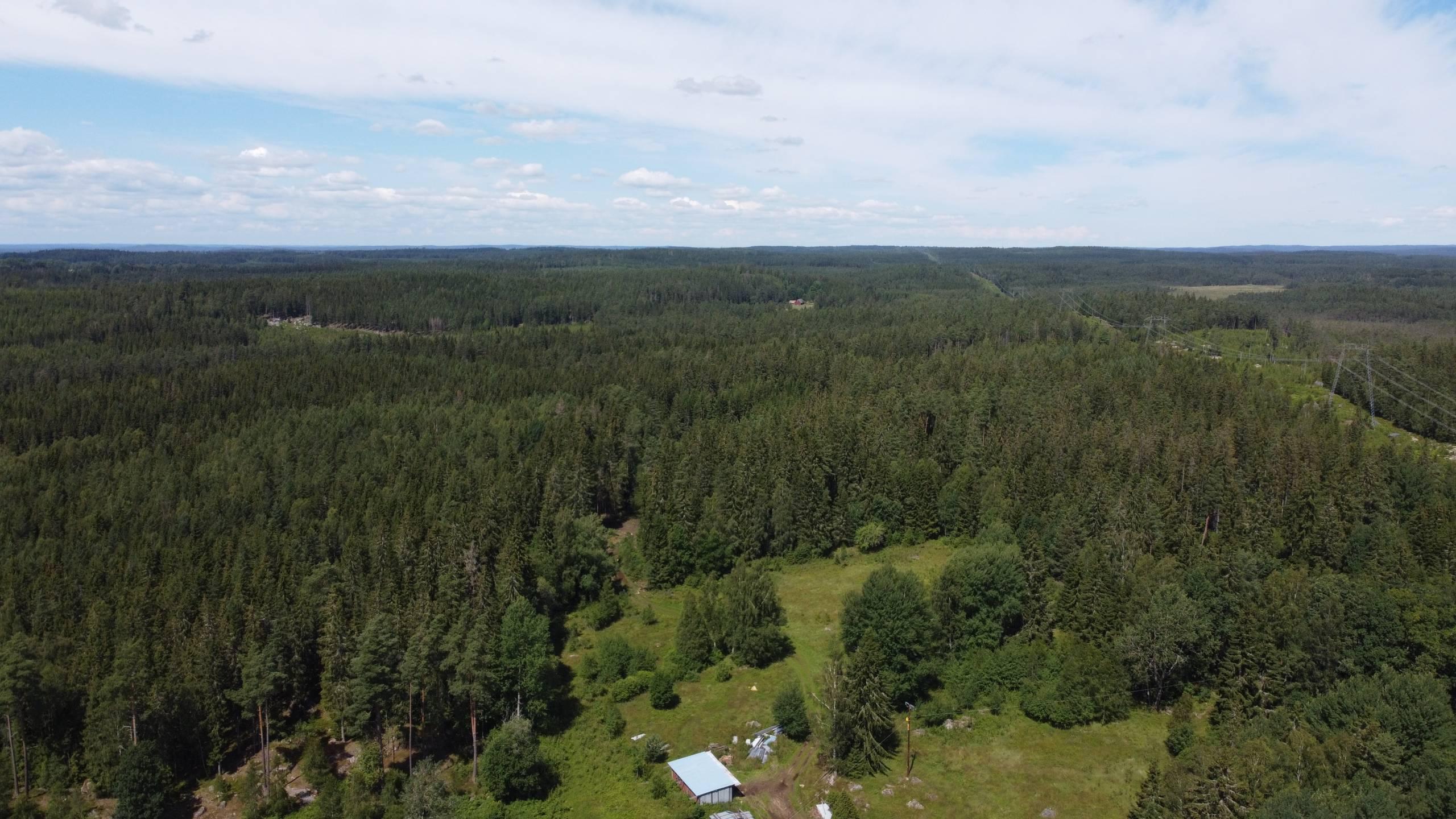 Schwedische Wälder In Der Umgebung Des Ferienhauses