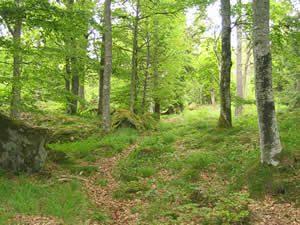 Schweden - Smaland: Gaeryd Naturreservat - Flora und Fauna