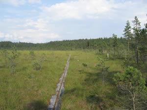 Schweden - Smaland: Mönchswanderweg Munkaleden