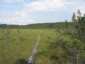 Schweden - Smaland: Wanderweg Munkaleden am Ruskensee