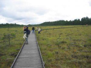 Nationalpark Store Mosse - großes Moorgebiet in Smaland - Schweden