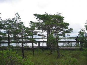 Smaland (Schweden): Nationalparkt Store Mosse - Urwüchsige natur