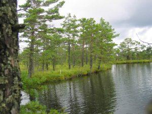 Smaland (Schweden): Nationalparkt Store Mosse - Romantioscher See