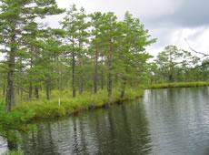 Smaland - Schweden: Nationalpark Store Mosse