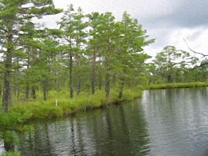 Schweden - Smaland: Nationalpark Store Mosse