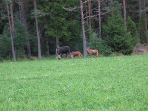 schweden-smaland-saevsjoe-elchsafari-04-700-525