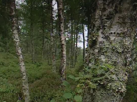 Nationalpark Store Mosse Moorgebiet in Smaland Schweden